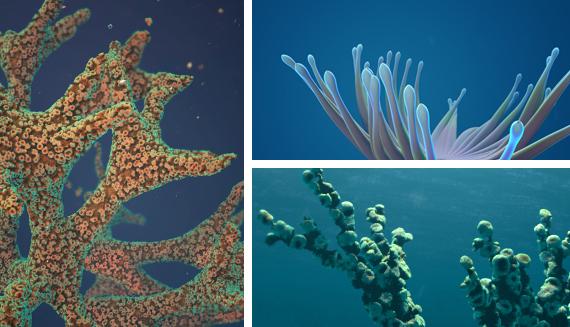 anemons_corals_FREMOX