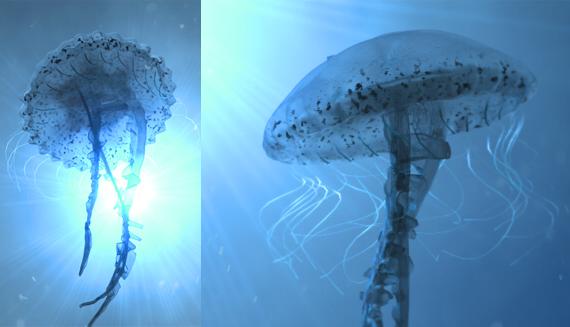 jellyfish_FREMOX